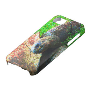 Giant Aldabra Tortoise Grunge, Kansas City Zoo iPhone SE/5/5s Case