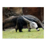 Giant Ant Eater4x6 Postcard