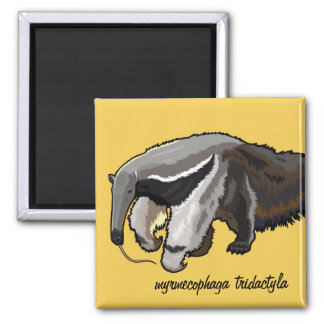 giant anteater 2 inch square magnet