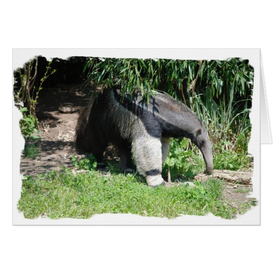Giant Anteater  Greeting Card