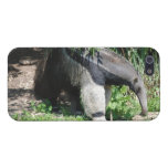 Giant Anteater Looking for Ants Cases For iPhone 5