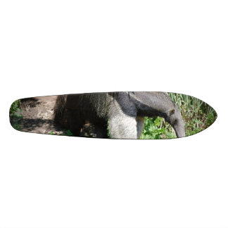 Giant Anteater Looking for Ants Skate Boards