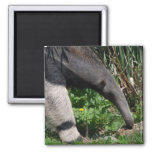 Giant Anteater Photo Magnet Refrigerator Magnet
