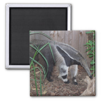 Giant Anteater Photo Square Magnet