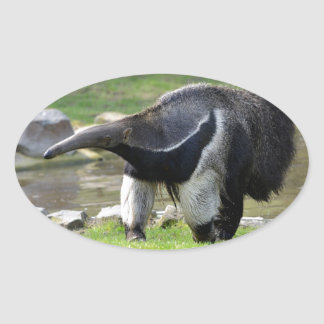 Giant Anteater walking on grass Oval Sticker