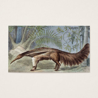 Giant Anteater Wildlife Illustration Business Card