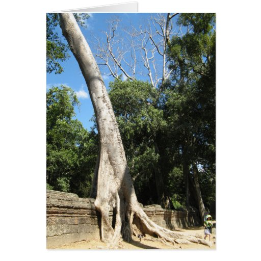 Giant Banyan Tree ... Ta Prohm Temple, Cambodia Greeting Cards