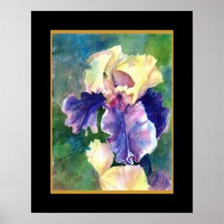 Giant Bearded Iris Poster