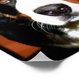 Giant Bernese Mountain Dog Poster