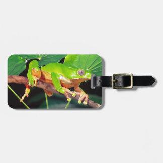 Giant Bicolor Monkey Treefrog, Phyllomedusa Bag Tag
