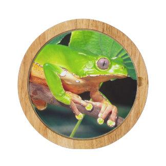 Giant Bicolor Monkey Treefrog, Phyllomedusa Cheese Board