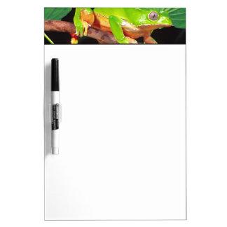 Giant Bicolor Monkey Treefrog, Phyllomedusa Dry-Erase Board