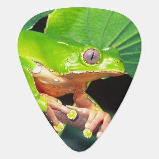 Giant Bicolor Monkey Treefrog, Phyllomedusa Guitar Pick