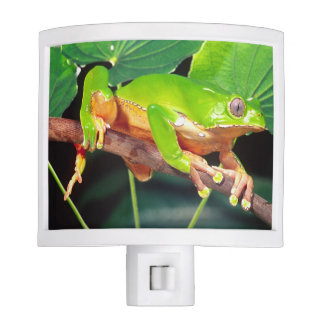 Giant Bicolor Monkey Treefrog, Phyllomedusa Night Light