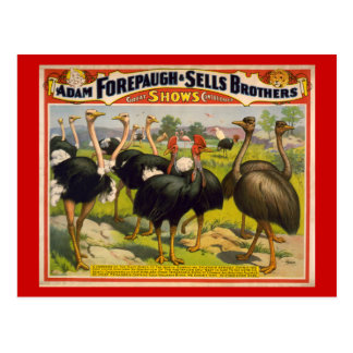 Giant Birds Circus Poster - Forepaugh and Sells Postcard