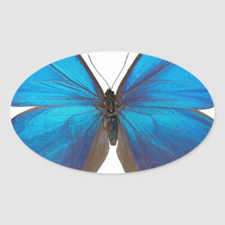 Giant Blue Morpho Butterfly Oval Sticker