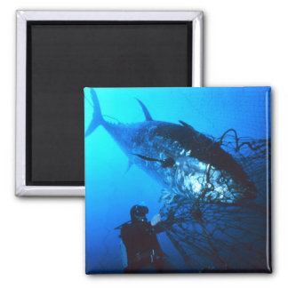 Giant Bluefin Tuna Caught in a Net Magnet