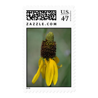 Giant Brown-eyed Susan Stamp
