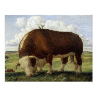 Giant Bull Post Cards