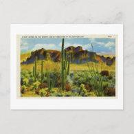 Giant Cactus in Desert - Vintage Postcard