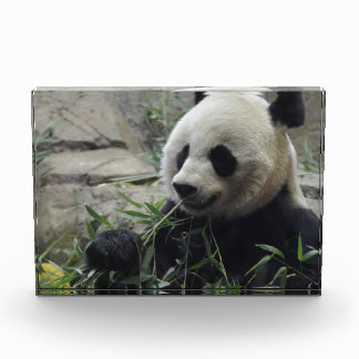 Giant Chinese Panda Bear Award