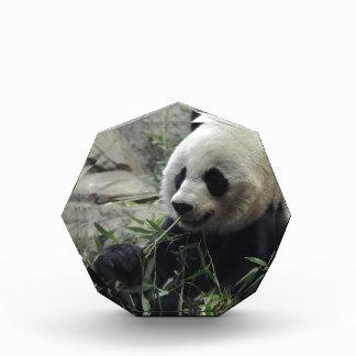 Giant Chinese Panda Bear Acrylic Award