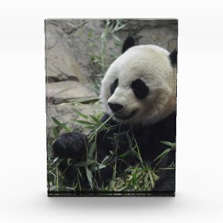Giant Chinese Panda Bear Awards
