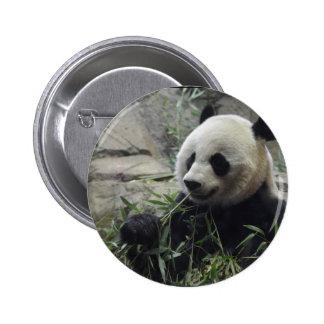 Giant Chinese Panda Bear Button