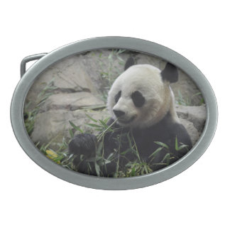 Giant Chinese Panda Bear Oval Belt Buckle