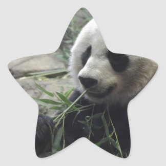 Giant Chinese Panda Bear Star Sticker