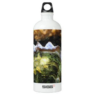 Giant Clam Aluminum Water Bottle