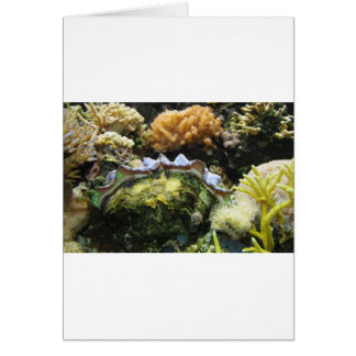 Giant Clam Greeting Cards