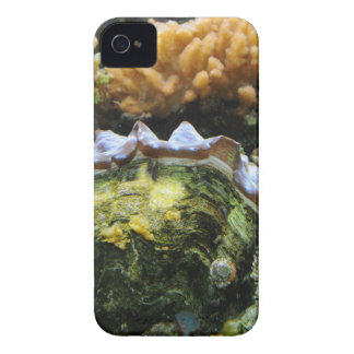 Giant Clam iPhone 4 Cases