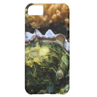 Giant Clam iPhone 5C Cases