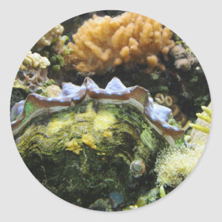 Giant Clam Classic Round Sticker
