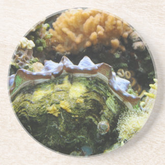 Giant Clam Drink Coasters