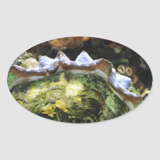 Giant Clam Oval Sticker