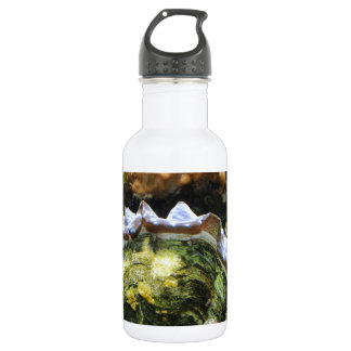 Giant Clam 18oz Water Bottle