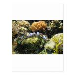 Giant Clam Postcard