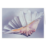 giant clam shell for decorative use cards