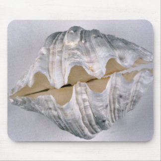 giant clam shell for decorative use mouse pad