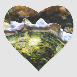 Giant Clam Heart Stickers