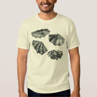 giant clam t-shirt