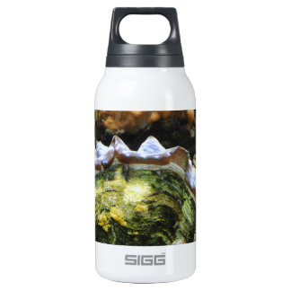 Giant Clam Thermos Water Bottle