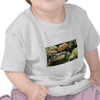 Giant Clam Shirts