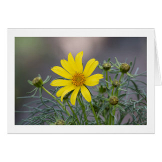 Giant Coreopsis greeting card