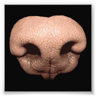 Giant Dog Nose Photograph