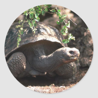 Giant Dome-Shaped Tortoise Closeup Round Sticker