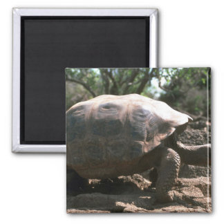 Giant Dome-Shaped Tortoise Walking Magnet