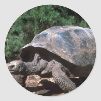 Giant Dome-Shaped Tortoise Walking Round Sticker